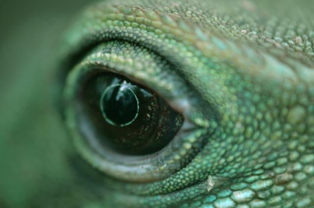 Y si existieran los híbridos reptilianos